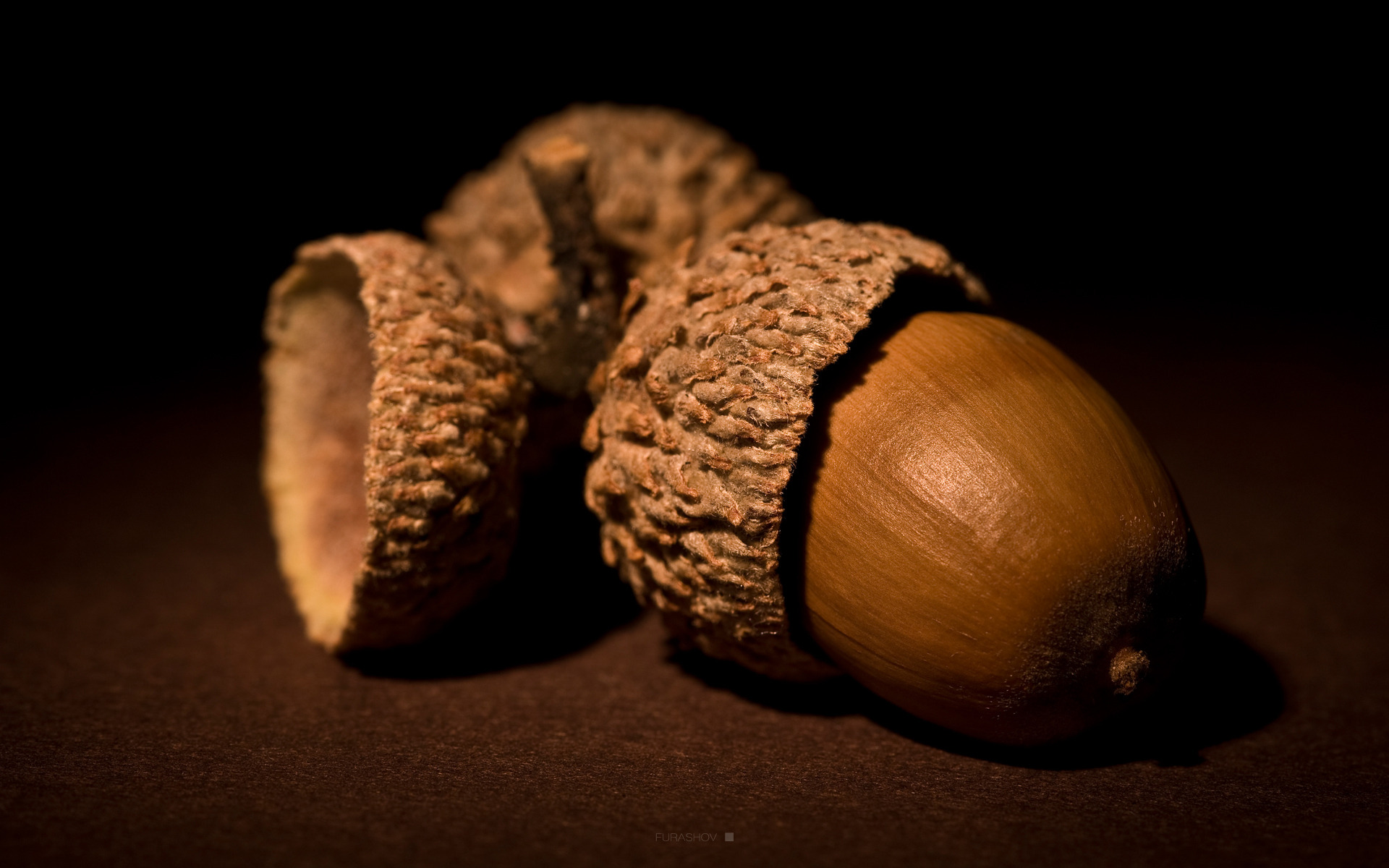 acorn-nuts-brown